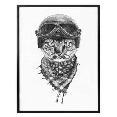 Poster Kools - Biker Cat