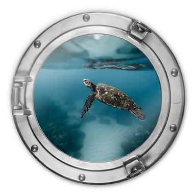Glasbild rund 3D-Optik Bullauge - Schildkröte seitlich