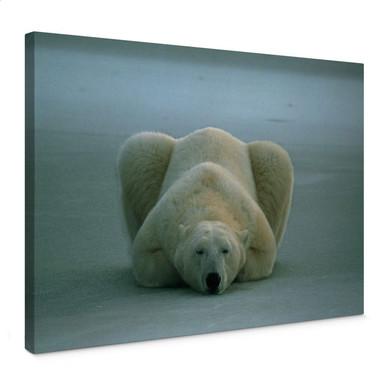 Leinwandbild NG Eisbär schlafend