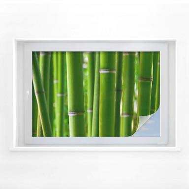 Sichtschutzfolie Bambuswald
