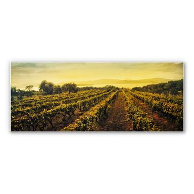 Hartschaumbild Weinreben im Sonnenuntergang - Panorama