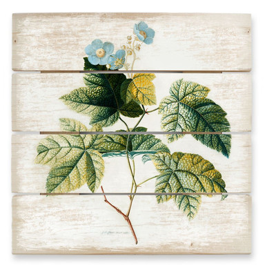 Holzbild Ehret - Rubus