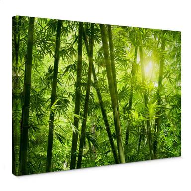 Leinwandbild Sonnenschein im Bambuswald