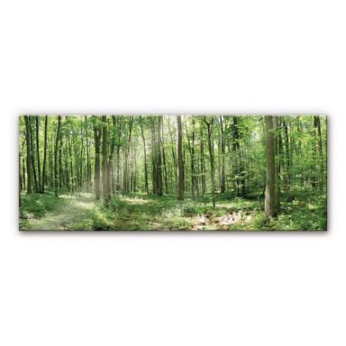 Acrylglasbild Waldpanorama 02