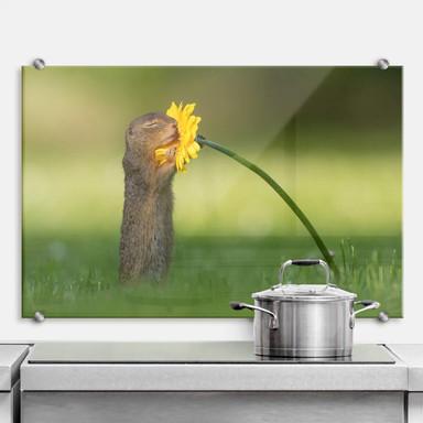 Spritzschutz van Duijn - Erdhörnchen riecht an Blume