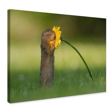Leinwandbild van Duijn - Erdhörnchen riecht an Blume