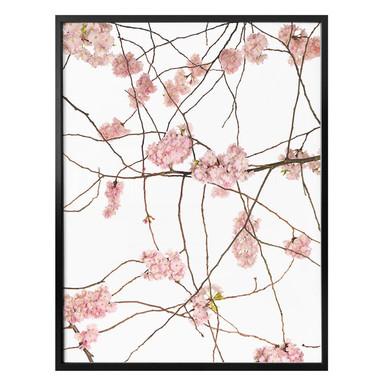 Poster Kadam - Japanische Kirschblüte