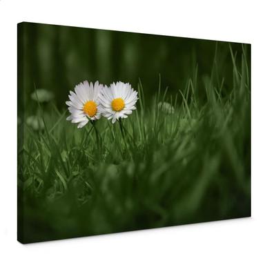 Leinwandbild Ben Heine - Zwei Gänseblümchen