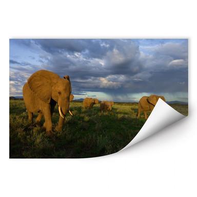 Wallprint NG Elefantenherde