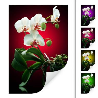Wallprint Blütenpracht einer Orchidee