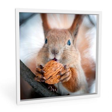 Wandbild Eichhörnchen mit Nuss - quadratisch