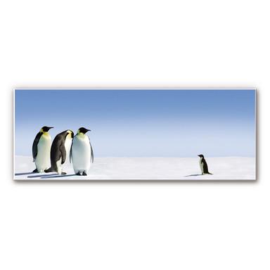 Hartschaumbild Penguin - Panorama