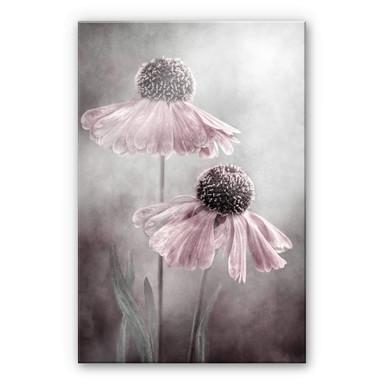 Acrylglasbild Disher - Rosa Duett