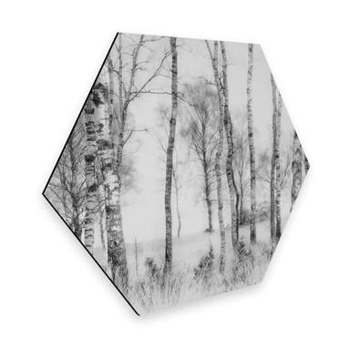 Hexagon - Alu-Dibond Talen - Schwarz-weisser Birkenwald