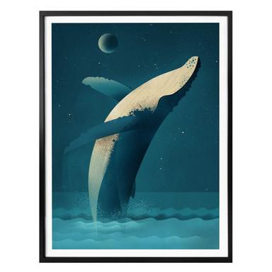 Poster Braun - Humpback Whale