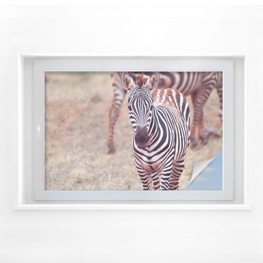Sichtschutzfolie Zebra Fohlen