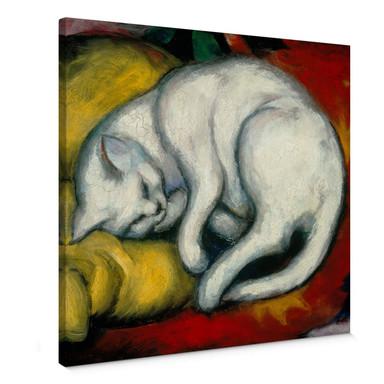 Leinwandbild Marc - Die weisse Katze - quadratisch