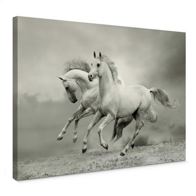 Leinwandbild Pferde im Galopp