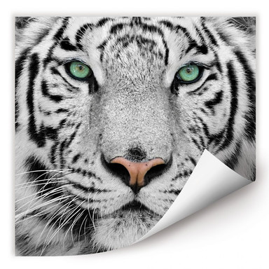 Wallprint Gorgeous Sumatran Tiger