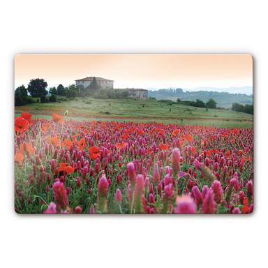 Glasbild Blumenwiese Toskana