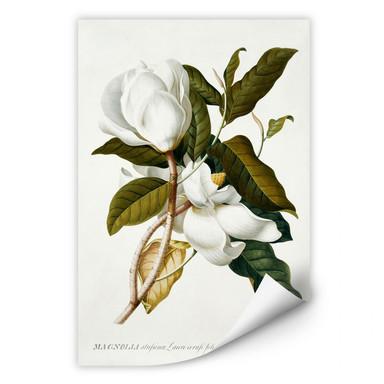 Wallprint Ehret - Magnolie