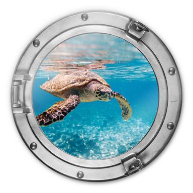 Glasbild 3D Optik Schildkröte auf Reisen - rund