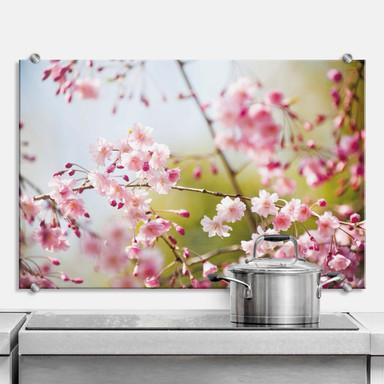 Spritzschutz Cherry Blossoms