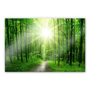 Acrylglasbild Sunny Forest
