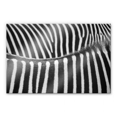 Acrylglasbild Zebramuster