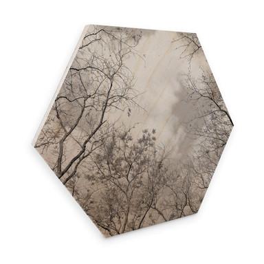 Hexagon - Holz Baumkronen im Himmel
