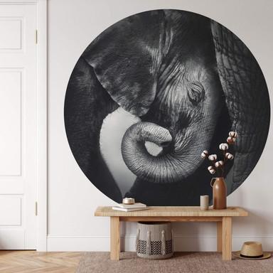 Fototapete Das Elefantenbaby - Rund