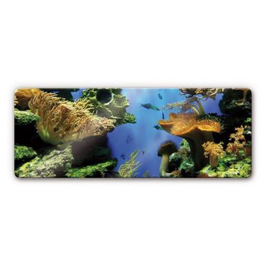 Glasbild Korallenriff Panorama