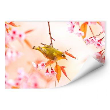 Wallprint Vogelgezwitscher in der Kirschblüte