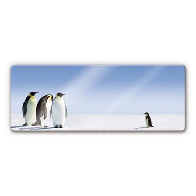 Glasbild Penguin Panorama