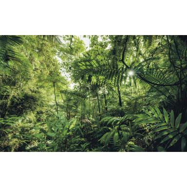 Fototapete Into the Jungle