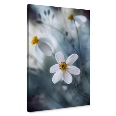 Leinwandbild Disher - Die weisse Blüte