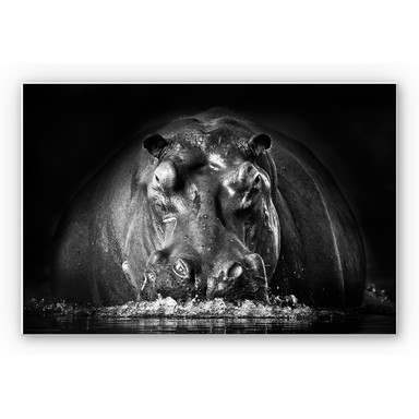 Wandbild Golob - Prustendes Nilpferd