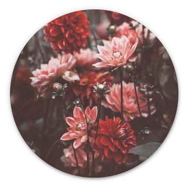 Alu-Dibond Annie - Sommerblüten - Rund