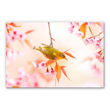 Acrylglasbild Vogelgezwitscher in der Kirschblüte