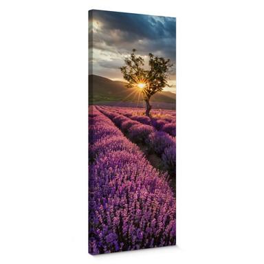 Leinwandbild Lavendelblüte in der Provence - Panorama 02