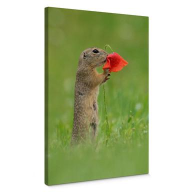 Leinwandbild van Duijn - Erdhörnchen mit Mohnblume