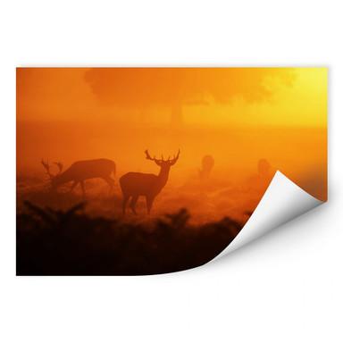 Wallprint Hirsche im Sonnenuntergang