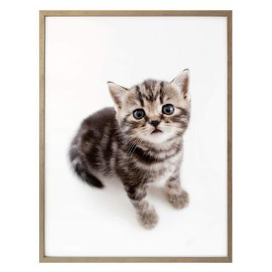 Poster Kätzchen erwartungsvoll