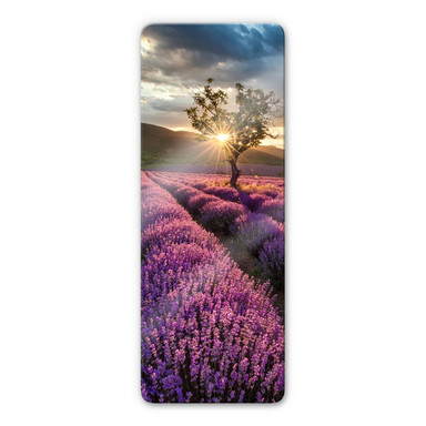 Glasbild Lavendelblüte in der Provence - Panorama 02