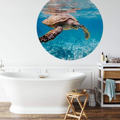 Fototapete Schildkröte auf Reisen - Rund