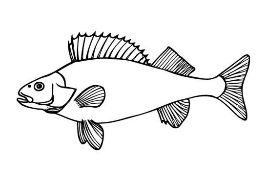 schwarz/weiss Ansicht - Wandtattoo Fisch Detailliert