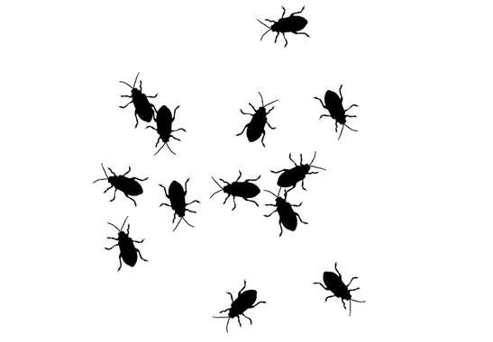 schwarz/weiss Ansicht - Wandtattoo Käfer Invasion