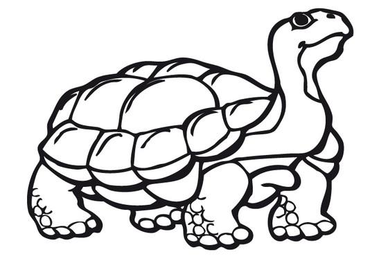 schwarz/weiss Ansicht - Wandtattoo Schildkröte