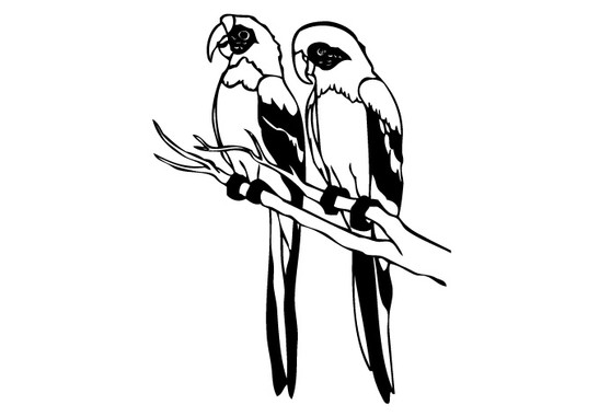schwarz/weiss Ansicht - Wandtattoo Papageien