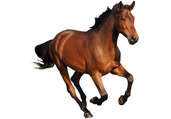 Wandtattoo The Running Horse - Bild 2